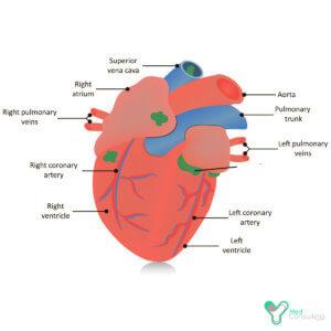 Имплантация кардиостимулятора в Германии