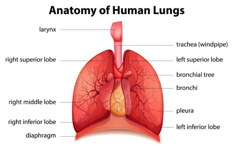 Лечение эмфиземы легких в Германии
